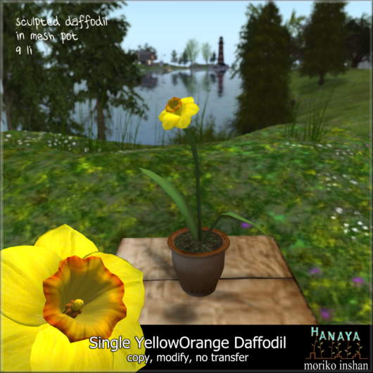 -Hanaya- Single Yellow Orange Daffodil