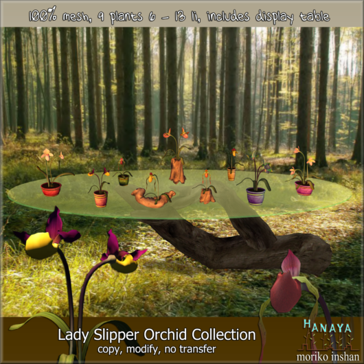 -Hanaya- Lady Slipper Orchid Collection [mesh]